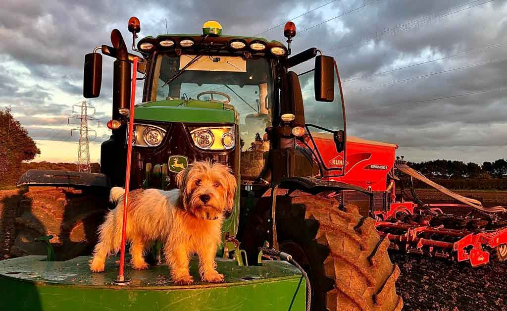 Simeon Morgan Farming Dog on tractor